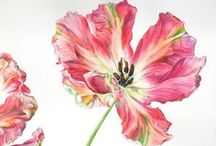 Lale / Tulip