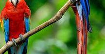 Bird Supplies Blog Posts / BirdSupplies.com - Feather Plucking Help. Parrot Bird Collars, Bird Calming Supplements, Parrot Vitamins, Feather Care, Behavior Modification Training Tips.