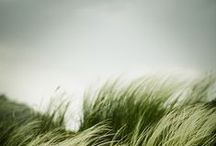 grass n' green