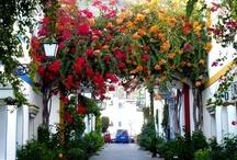 Mallorca / Travelopo offers Luxury Holiday Villas & Apartments in Mallorca, Book your Mallorcan holiday villa or apartment with Travelopo.com