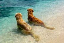 beach is better
