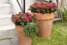 """Queen® Outdoor / Queen® offers special kalanchoe species, which are perfectly suited for the garden. Choose the species with """"Outdoor"""" marked on the packaging. These are specially selected species developed by Queen® to cope with the outdoor climate, and they are characteristic by having only few petals.  Queen® Outdoor can resist all kinds of weather, except for frost: rain, drought, wind, shadow and full sun. Meaning that you can plant them out from spring and leave them in the garden until the frost begins."""