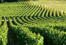 Campagne auxerroise / Au coeur des vignobles, au départ du Canal du Nivernais, à travers champs... Auxerre, c'est la ville à la campagne !