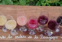 Auxerre et ses Vignobles / Le vignoble occupe une place toute particulière dans l'Auxerrois de par son ancienneté (la vigne y est cultivée depuis le 2ème siècle) et de par sa renommée : Irancy, Crémant de Bourgogne...  Le vignoble auxerrois est labellisé depuis 2013 « Vignobles et Découvertes ».