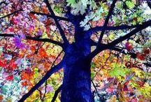 ARBRES... / Les arbres dans tous leurs états. Inspirant des métaphores, symbolisant l'ancrage à la terre, l'arbre caractérise la puissance de la vie s'élevant vers le ciel...des racines et des ailes. / by CHARLOTTE SAINTONGE