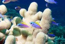 UNDER THE SEA / Explore all the Caribbean Sea and all the beauty that's to be found in the Cayman Islands underwater world.