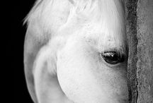 Horses / Beautiful horse pictures!