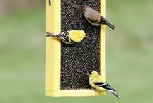 outdoors - bird feeders