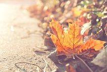 Autumn - Ősz