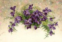 lilac - leylak