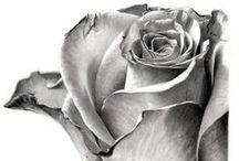 Rose  Art  -  coloring pages