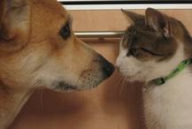 Kitties and puppies