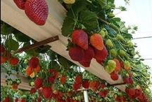 for Dimitris garden
