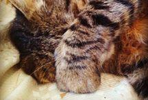 Cats / La mia colonia felina