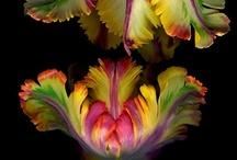 flores e plantas / by Daniela Petroni