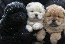 cute / animals to ador