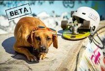 ADOTE UM ANIMAL / Divulgação de feiras de adoção e animais para adoção em todo o Brasil. Acompanhe também pelo blog: www.bondedabardot.blogspot.com