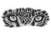 Original Artworks / Wildlife artworks, drawings and sketches I have created over a few Months, I am using Ink, charcoal, pencil. These are my investment artworks. http://davidrabie.co.za