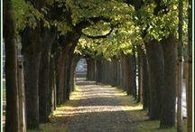 My hometown Oisterwijk - NL