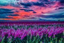 madre.....natura / la natura è fantastica ...ma un grazie ai fotografi che l'hanno esaltata