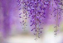 lila colours