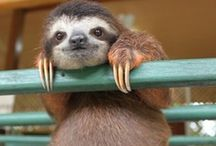 Sloth / Inspire!Fav animal 4ever