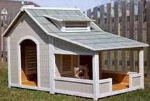 For The Birds / Great ideas for FurHaven!  (Otherwise known as our house...)