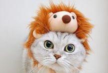 how cute!!!!