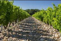 Vignes Mont-Redon / Découvrez les vignes du Château Mont-Redon. Elles sont le patrimoine de notre terroir et de notre savoir-faire.