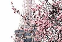 Garden of Eden / Poinsettia. Cherry Blossom. Tulip. Edelweiss.