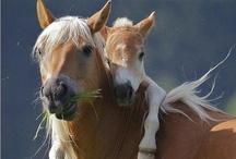 S.T Horses