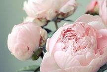 Romantic style ~ colour