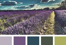 Palettes by Seeds