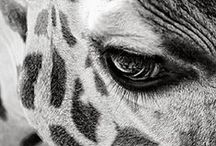 Nu Zoo... / Shot with a camera... Held captive in an image... Poachers welcome!!!...