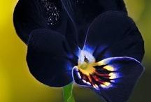 Amazing flowers / by Olga Secret