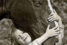 Horses / by sarah