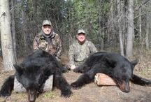 Black Bear Hunting in Alberta Canada / Once you've been black bear hunting in Alberta you won't want to hunt anywhere else. The color phases range from black to blond. The average male black bear will weigh anywhere from 200-450+ pounds with many being 6' plus from nose to tail.  Black bears are active from spring through to autumn and are hunted over bait or by spot and stalk. It's almost a certainty you will get a shot at a trophy black bear no matter what method you use.  Visit http://www.abhunting.com to book a bear hunting trip