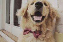 ❥ Precious Pups ❥ / by Proudly Preppy