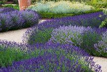 Garden design inspiration for Neri