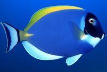 Фото море и рыбы