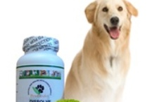 Lipomas / All things to help dogs that have lipomas known as fatty tumors.