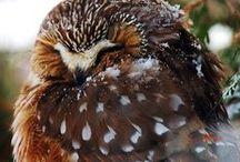 Cheryl's Backyard Birds / Birds of Abitibi Campground, Cochrane Ontario