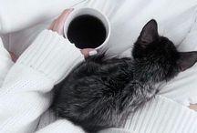 Petit animaux / les chates, le chien et tout doux  de fourrure