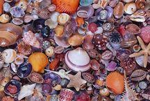treasures of sea & ocean...