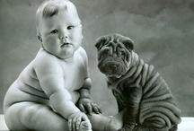 Imágenes divertidas de animales / Las imágenes más divertidas que nos llegan a www.petclic.es, tu tienda para animales de ahorro y buen rollo ;)