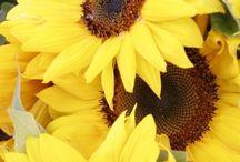 Yellow Wedding / Yellow wedding sunflower ideas yellow and grey wedding