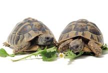 Fotos de Tortugas Petclic