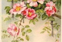 Kwiaty, rośliny