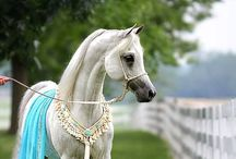 Horses In General / I've owned Arabians and one Quarterhorse, but love any sane and beautiful horse or mule, my latest crush is working drafts. / by Ruthann Nelson