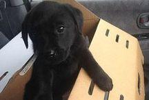 Hunde / Schon immer wird der Hund als treuer Gefährte des Menschen geschätzt. Wohl kaum ein Haustier steht dem Menschen so nah wie er. Ob als Familienhund, Spielgefährte oder Arbeitshelfer: Hunde sind faszinierende und höchst soziale Lebewesen. Hier erfahrt Ihr mehr: http://www.die-tier-welt.com/hunde